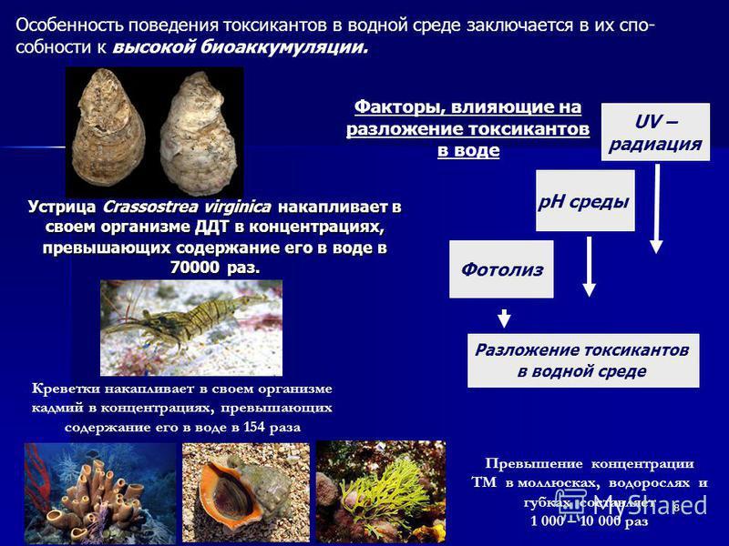 8 Устрица Crassostrea virginica накапливает в своем организме ДДТ в концентрациях, превышающих содержание его в воде в 70000 раз. Разложение токсикантов в водной среде Фотолиз рН среды UV – радиация Факторы, влияющие на разложение токсикантов в воде