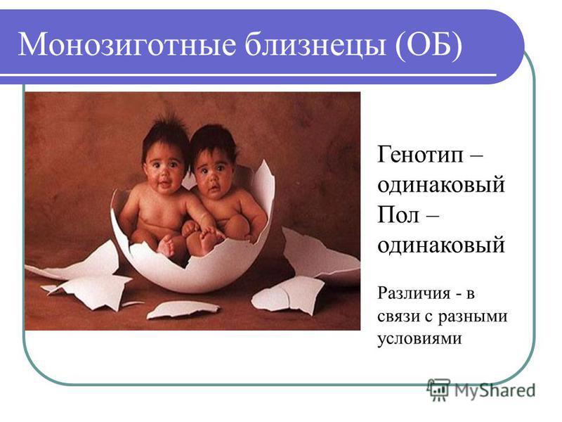 Монозиготные близнецы (ОБ) Генотип – одинаковый Пол – одинаковый Различия - в связи с разными условиями