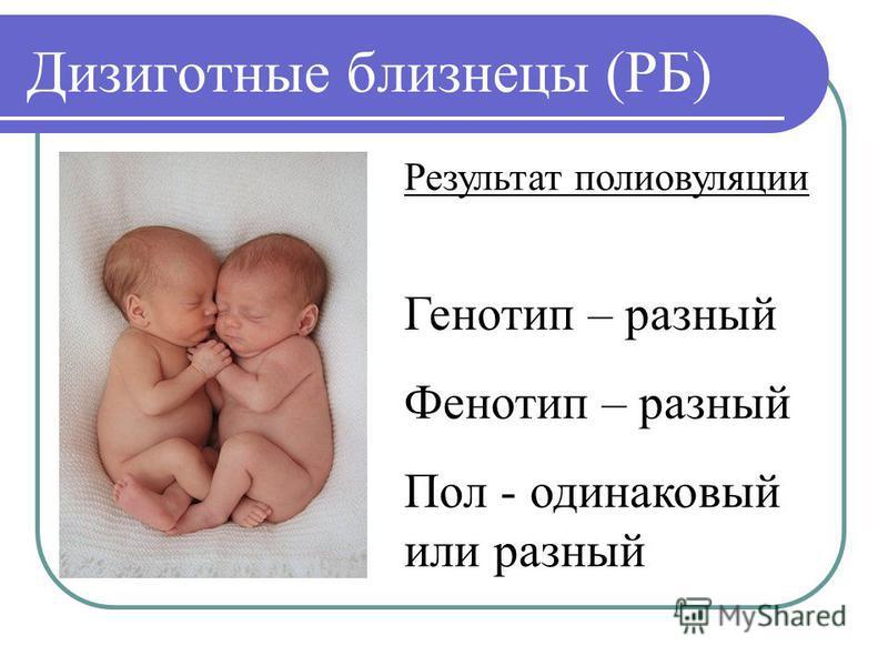 Дизиготные близнецы (РБ) Результат поли овуляции Генотип – разный Фенотип – разный Пол - одинаковый или разный