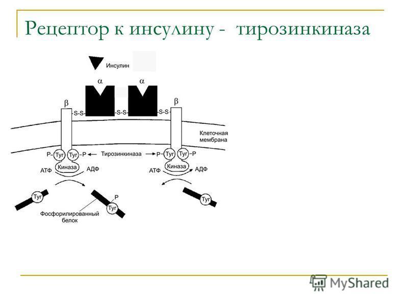 Рецептор к инсулину - тирозинкиназа