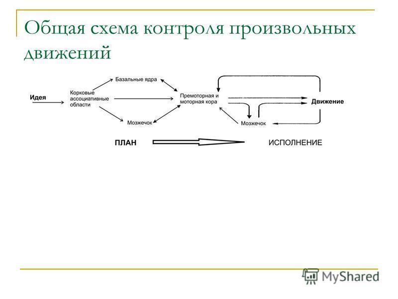 Общая схема контроля произвольных движений