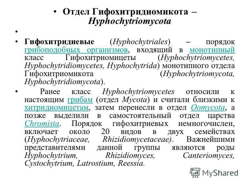 Отдел Гифохитридиомикота – Hyphochytriomycota Гифохитридиевые (Hyphochytriales) – порядок грибоподобных организмов, входящий в монотипный класс Гифохитриомицеты (Hyphochytriomycetes, Hyphochytridiomycetes, Hyphochytrida) монотипного отдела Гифохитрио