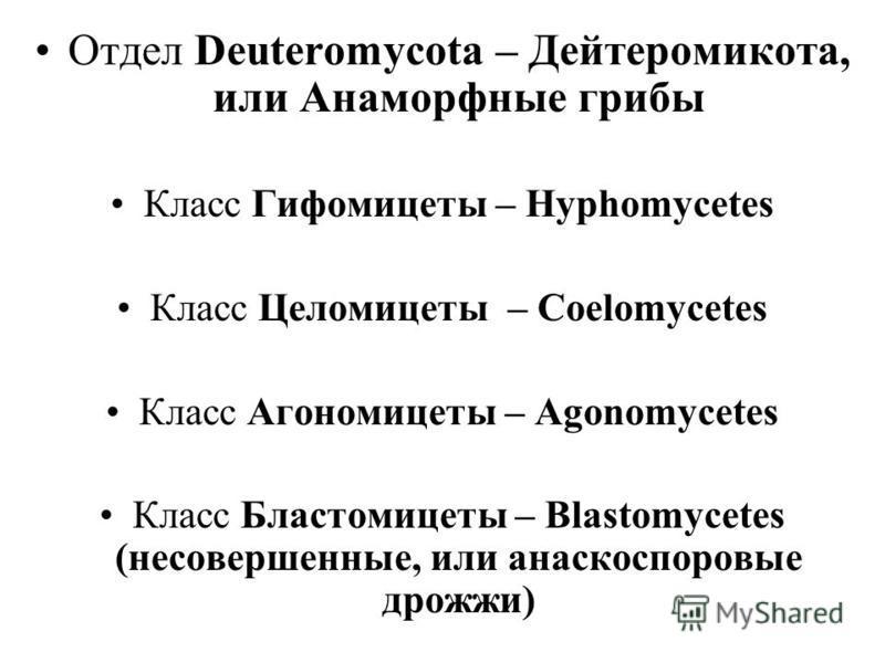 Отдел Deuteromycota – Дейтеромикота, или Анаморфные грибы Класс Гифомицеты – Hyphomycetes Класс Целомицеты – Coelomycetes Класс Агономицеты – Agonomycetes Класс Бластомицеты – Blastomycetes (несовершенные, или анаскоспоровые дрожжи)