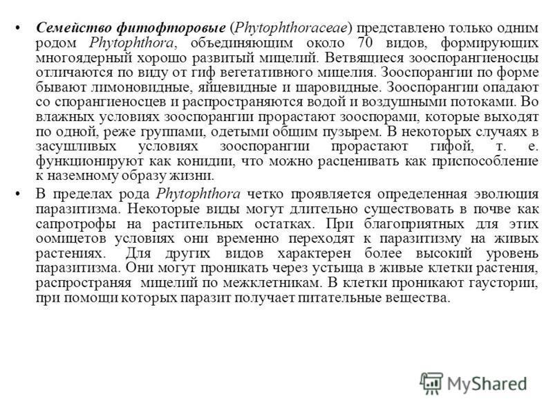 Семейство фитофторовые (Phytophthoraсеае) представлено только одним родом Phytophthora, объединяющим около 70 видов, формирующих многоядерный хорошо развитый мицелий. Ветвящиеся зооспорангиеносцы отличаются по виду от гиф вегетативного мицелия. Зоосп
