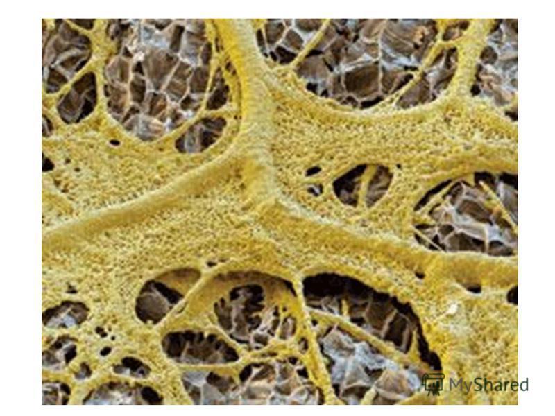Пиперазин при лечении глистов