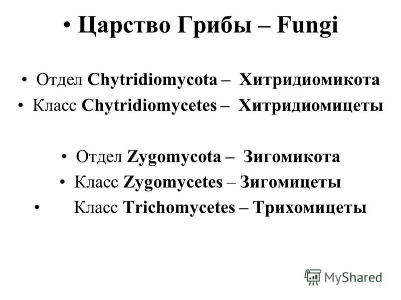 Царство Грибы – Fungi Отдел Chytridiomycota – Хитридиомикота Класс Chytridiomycetes – Хитридиомицеты Отдел Zygomycota – Зигомикота Класс Zygomycetes – Зигомицеты Класс Trichomycetes – Трихомицеты