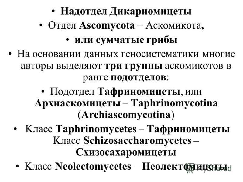 Надотдел Дикариомицеты Отдел Ascomycota – Аскомикота, или сумчатые грибы На основании данных геносистематики многие авторы выделяют три группы аскомикотов в ранге подотделов: Подотдел Тафриномицеты, или Архиаскомицеты – Taphrinomycotina (Archiascomyc