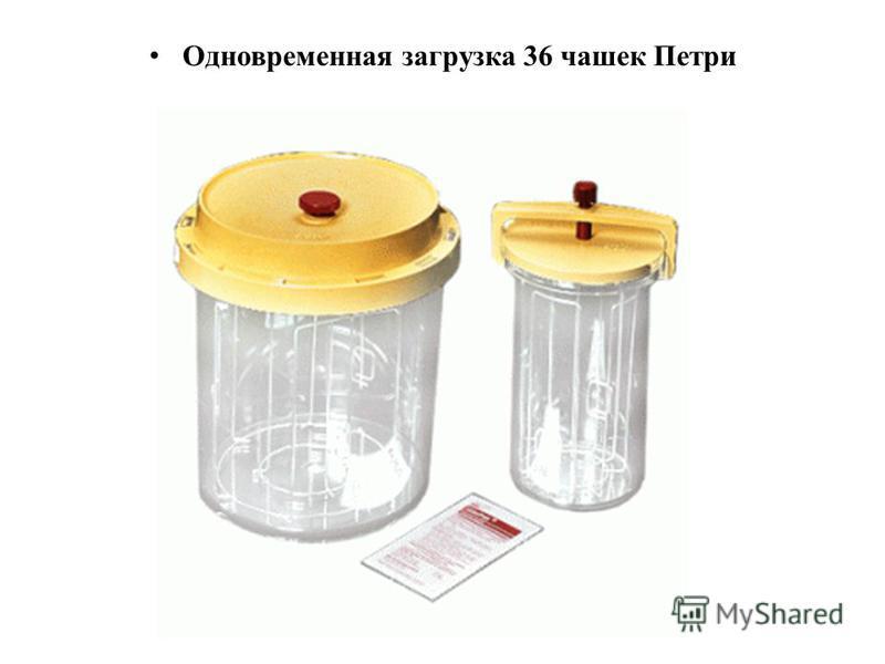 Одновременная загрузка 36 чашек Петри