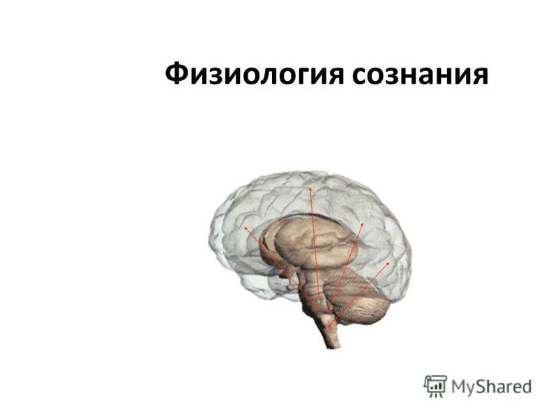 Физиология сознания