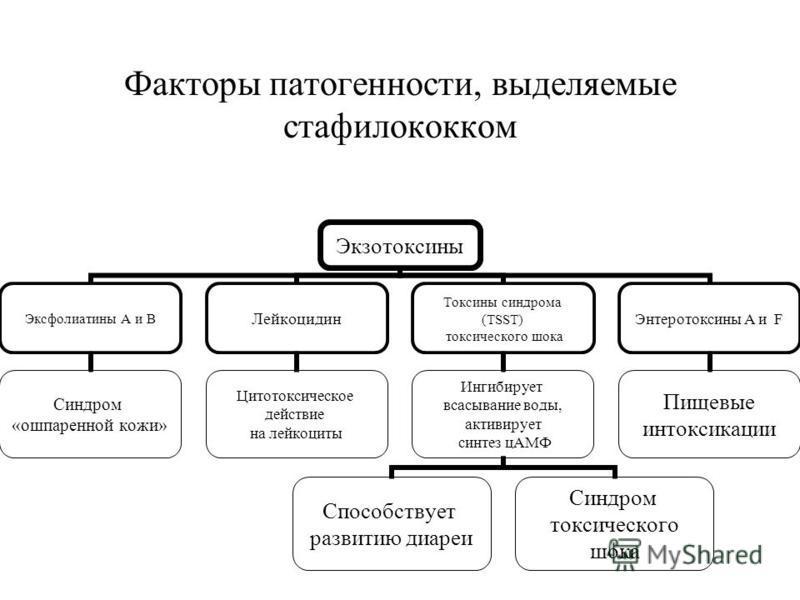 Факторы патогенности, выделяемые стафилококком Экзотоксины Эксфолиатины А и В Синдром «ошпаренной кожи» Лейкоцидин Цитотоксическое действие на лейкоциты Токсины синдрома (TSST) токсического шока Ингибирует всасывание воды, активирует синтез цАМФ Спос
