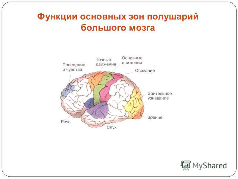 Функции основных зон полушарий большого мозга