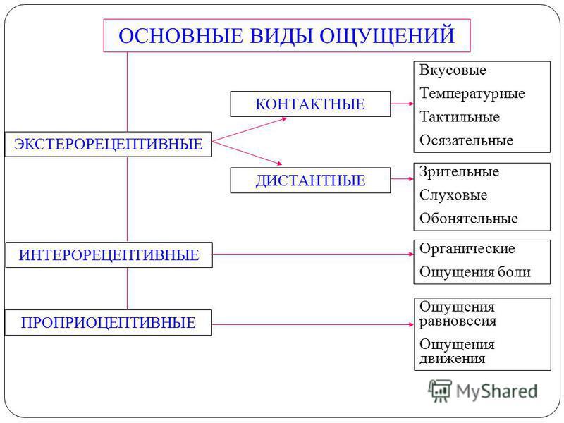 ОСНОВНЫЕ ВИДЫ ОЩУЩЕНИЙ ЭКСТЕРОРЕЦЕПТИВНЫЕ ИНТЕРОРЕЦЕПТИВНЫЕ ПРОПРИОЦЕПТИВНЫЕ ДИСТАНТНЫЕ КОНТАКТНЫЕ Вкусовые Температурные Тактильные Осязательные Зрительные Слуховые Обонятельные Органические Ощущения боли Ощущения равновесия Ощущения движения