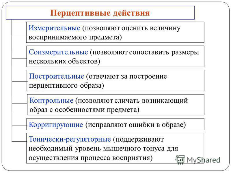 Перцептивные действия Измерительные (позволяют оценить величину воспринимаемого предмета) Соизмерительные (позволяют сопоставить размеры нескольких объектов) Построительные (отвечают за построение перцептивного образа) Контрольные (позволяют сличать