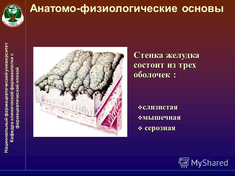 Национальный фармацевтический университет Кафедра клинической фармакологии с фармацевтической опекой Анатомо-физиологические основы Стенка желудка состоит из трех оболочек : слизистая слизистая мышечная мышечная серозная серозная