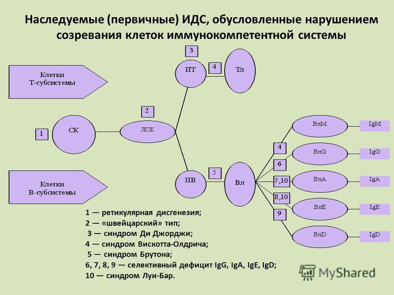 Наследуемые (первичные) ИДС, обусловленные нарушением созревания клеток иммунокомпетентной системы 1 ретикулярная дисгенезия; 2 «швейцарский» тип; 3 синдром Ди Джорджи; 4 синдром Вискотта-Олдрича; 5 синдром Брутона; 6, 7, 8, 9 селективный дефицит IgG