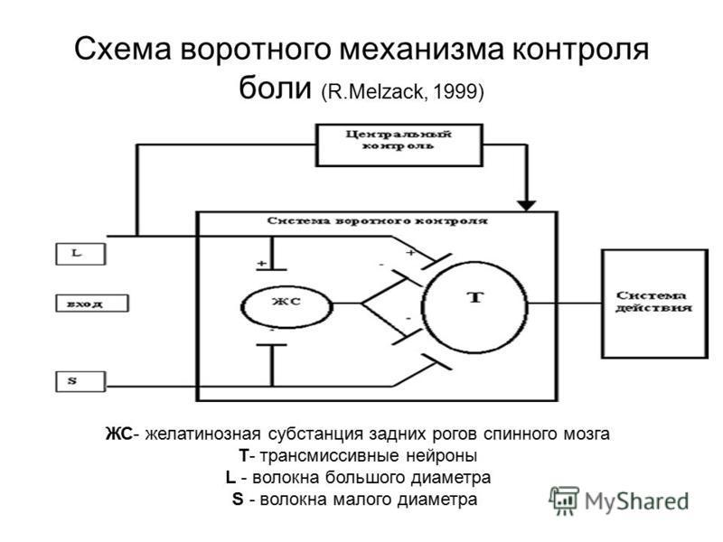 Схема воротного механизма контроля боли (R.Melzack, 1999) ЖС- желатинозная субстанция задних рогов спинного мозга Т- трансмиссивные нейроны L - волокна большого диаметра S - волокна малого диаметра