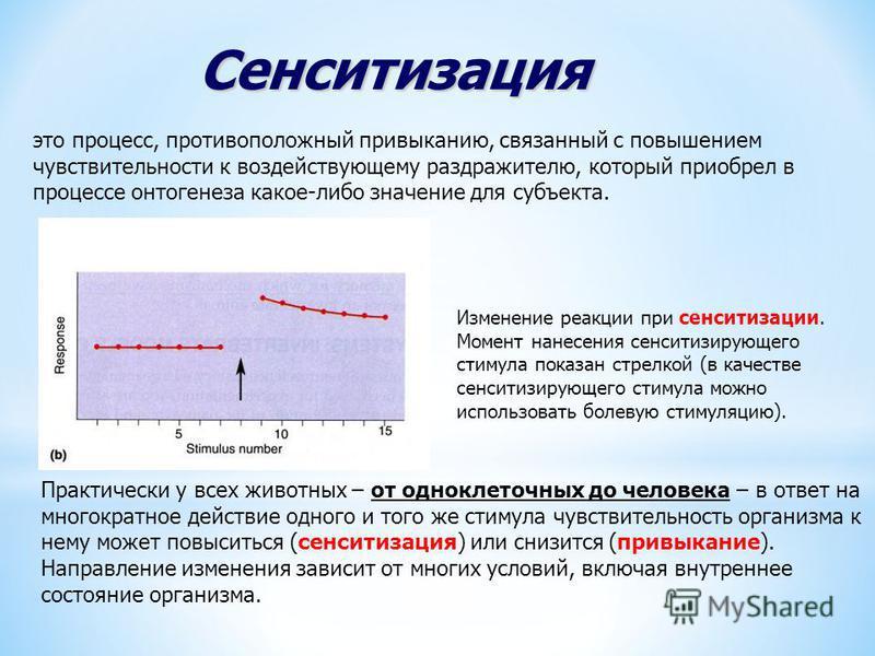 Изменение реакции при сенситизации. Момент нанесения сенситизирующего стимула показан стрелкой (в качестве сенситизирующего стимула можно использовать болевую стимуляцию). Сенситизация это процесс, противоположный привыканию, связанный с повышением ч