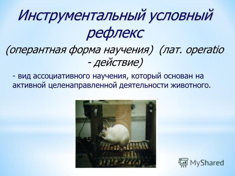 Инструментальный условный рефлекс (оперантная форма научения) (лат. operatio - действие) - вид ассоциативного научения, который основан на активной целенаправленной деятельности животного.