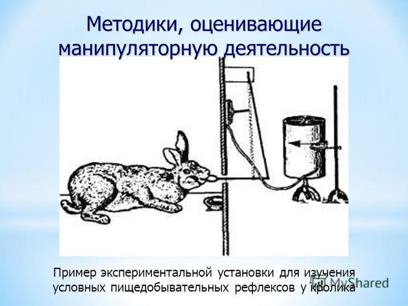 Пример экспериментальной установки для изучения условных пищедобывательных рефлексов у кролика Методики, оценивающие манипуляторную деятельность