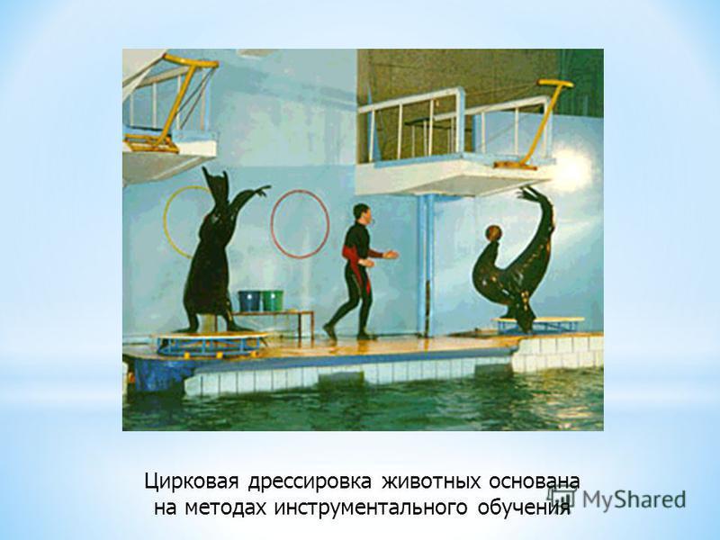 Цирковая дрессировка животных основана на методах инструментального обучения