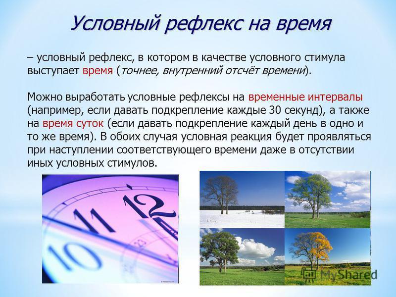 Условный рефлекс на время – условный рефлекс, в котором в качестве условного стимула выступает время (точнее, внутренний отсчёт времени). Можно выработать условные рефлексы на временные интервалы (например, если давать подкрепление каждые 30 секунд),