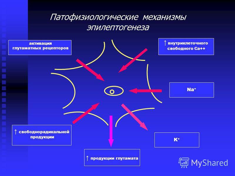 A) 1.Клетки-пейсмекеры (12%), склонные к спонтанному пароксизмальному деполяризационному сдвигу (ПДС) мембранного потенциала 2. Подчиненные клетки (16%) 3. Неэпилептические клетки (72%) B) 1. Зона деструкции 2. Промежуточная зона 3.Клетки, продуцирую