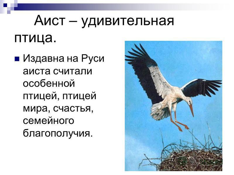 Аист – удивительная птица. Издавна на Руси аиста считали особенной птицей, птицей мира, счастья, семейного благополучия.