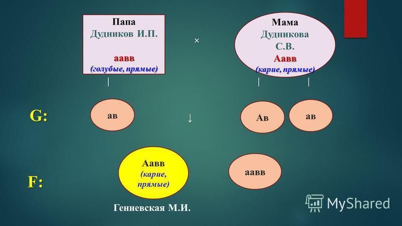 × × | | | | | | Папа Дудников И.П.аа вв (голубые, прямые) Мама Дудникова С.В.Аа вв (карие, прямые) G: а в Ав а в F: Аа вв (карие, прямые) аа вв Гениевская М.И.