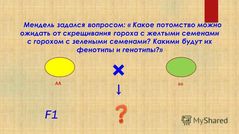Мендель задался вопросом: « Какое потомство можно ожидать от скрещивания гороха с желтыми семенами с горохом с залеными семенами? Какими будут их фенотипы и генотипы?» × F1F1 АА аа