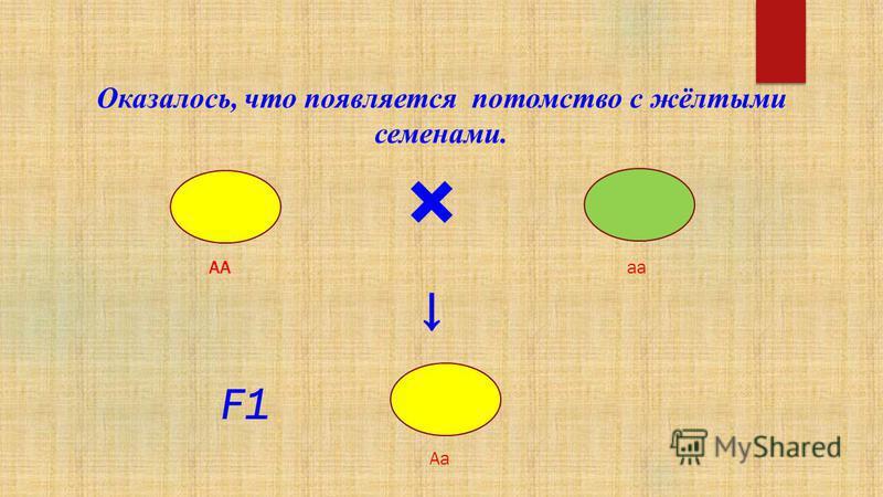 × F1F1 Оказалось, что появляется потомство с жёлтыми семенами. АА аа Аа