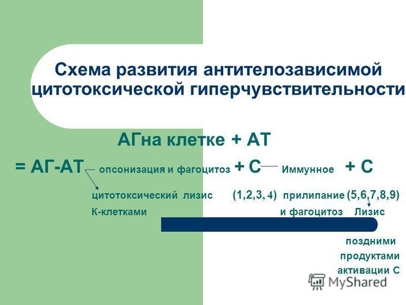 Схема развития антителозависимой цитотоксической гиперчувствительности АГна клетке + АТ = АГ-АТ опсонизация и фагоцитоз + С Иммунное + С цитотоксический лизис (1,2,3, 4 ) прилипание (5,6,7,8,9) К-клетками и фагоцитоз Лизис поздними продуктами активац
