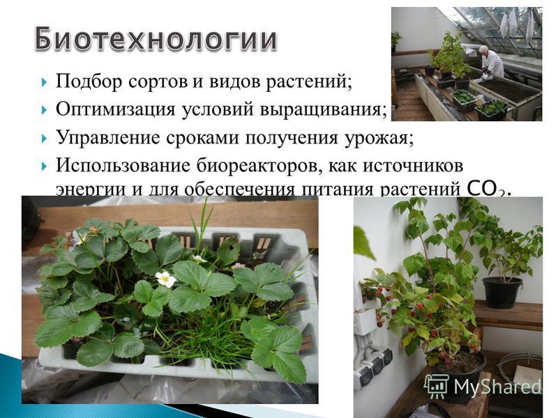 Подбор сортов и видов растений; Оптимизация условий выращивания; Управление сроками получения урожая; Использование биореакторов, как источников энергии и для обеспечения питания растений СО 2.