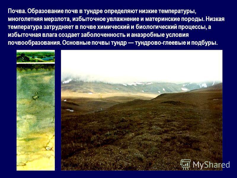 Почва. Образование почв в тундре определяют низкие температуры, многолетняя мерзлота, избыточное увлажнение и материнские породы. Низкая температура затрудняет в почве химический и биологический процессы, а избыточная влага создает заболоченность и а