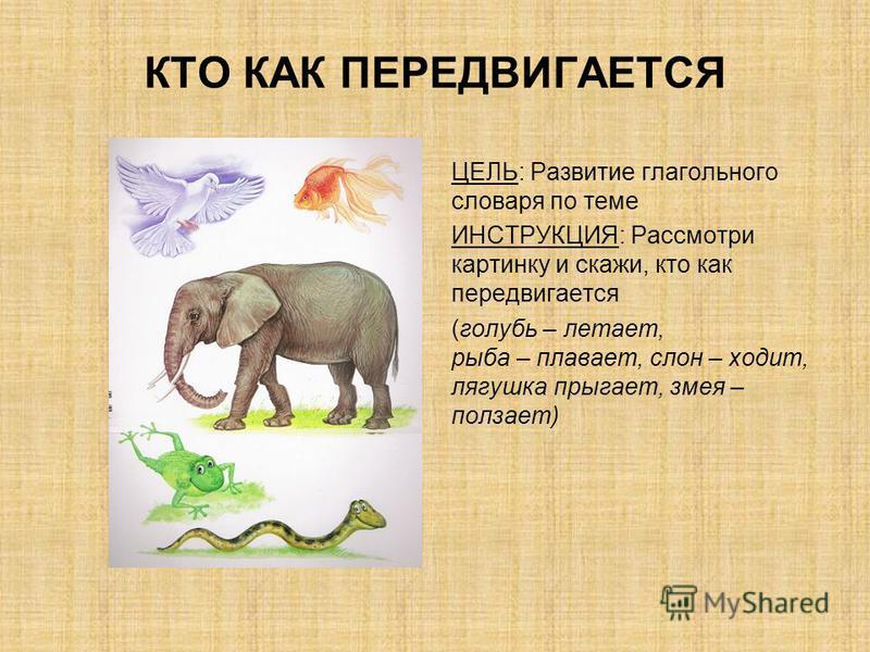 КТО КАК ПЕРЕДВИГАЕТСЯ ЦЕЛЬ: Развитие глагольного словаря по теме ИНСТРУКЦИЯ: Рассмотри картинку и скажи, кто как передвигается (голубь – летает, рыба – плавает, слон – ходит, лягушка прыгает, змея – ползает)