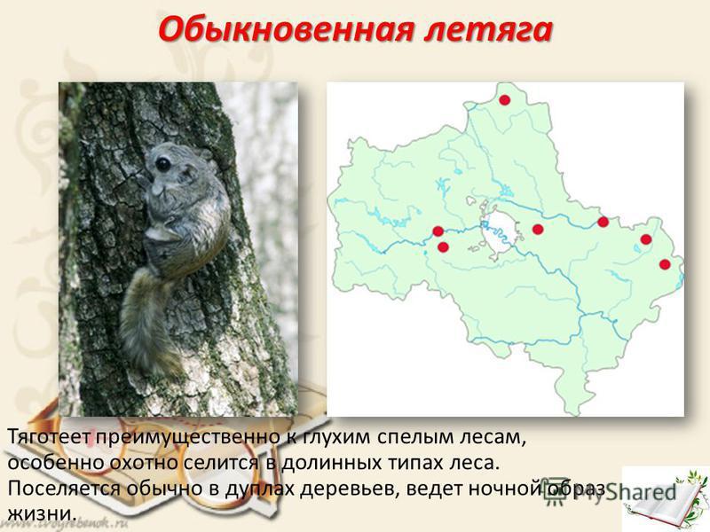 Обыкновенная летяга Тяготеет преимущественно к глухим спелым лесам, особенно охотно селится в долинных типах леса. Поселяется обычно в дуплах деревьев, ведет ночной образ жизни.