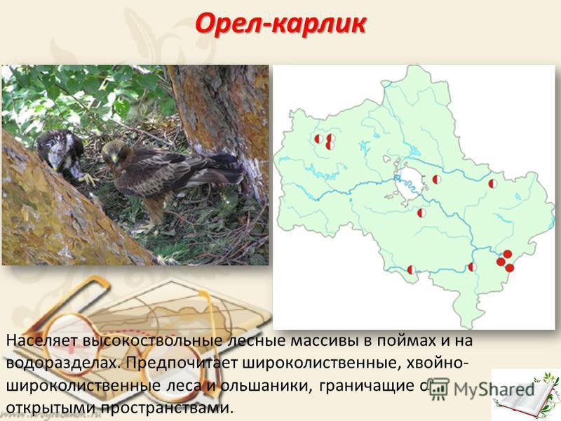 Орел-карлик Населяет высокоствольные лесные массивы в поймах и на водоразделах. Предпочитает широколиственные, хвойно- широколиственные леса и ольшаники, граничащие с открытыми пространствами.