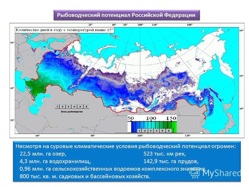 Рыбоводческий потенциал Российской Федерации Несмотря на суровые климатические условия рыбоводческий потенциал огромен: 22,5 млн. га озер, 523 тыс. км рек, 4,3 млн. га водохранилищ, 142,9 тыс. га прудов, 0,96 млн. га сельскохозяйственных водоемов ком