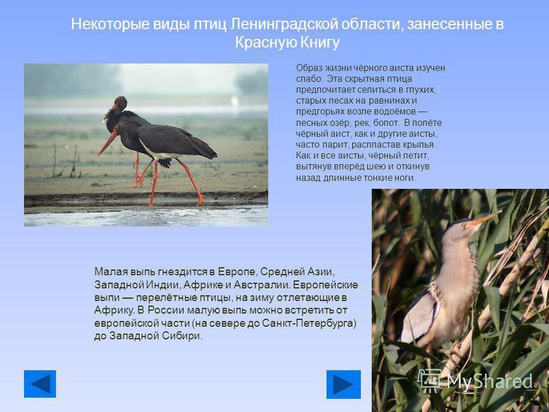 Что такое Красная Книга Ленинградской области Красная книга природы Ленинградской области была издана в 19992002 годах. В её создании принимали участие учёные Санкт-Петербурга, также помощь оказывало Министерство окружающей среды Финляндии. Красная к
