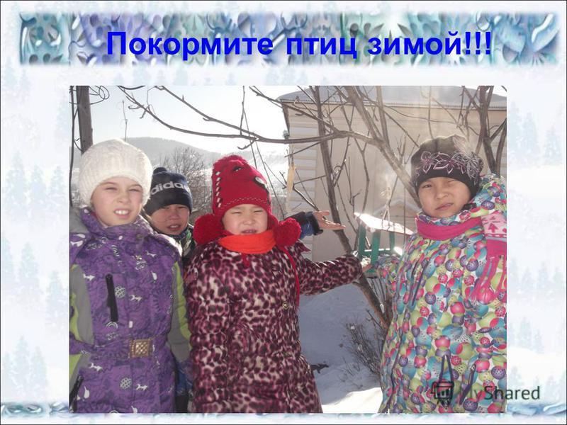 Покормите птиц зимой!!!