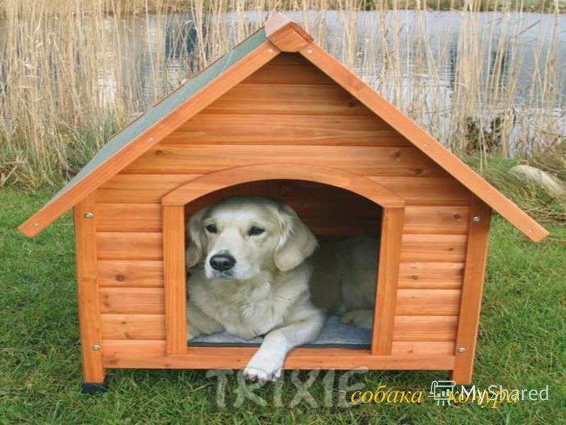 собака – конура