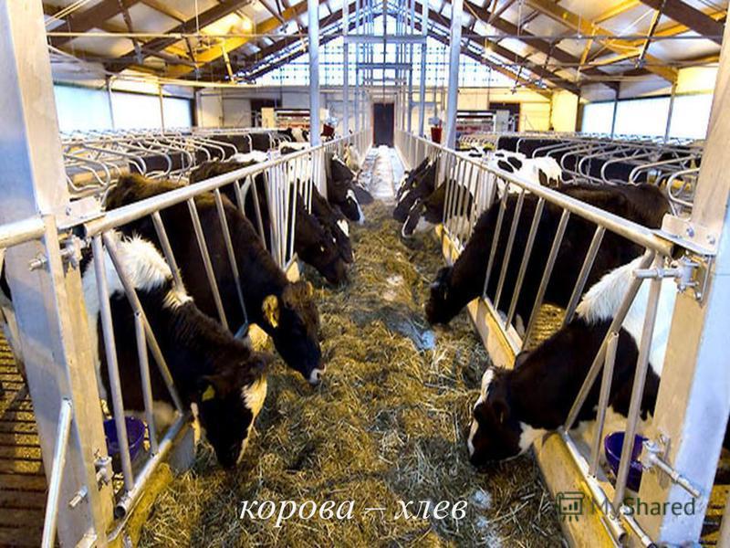 корова – хлев