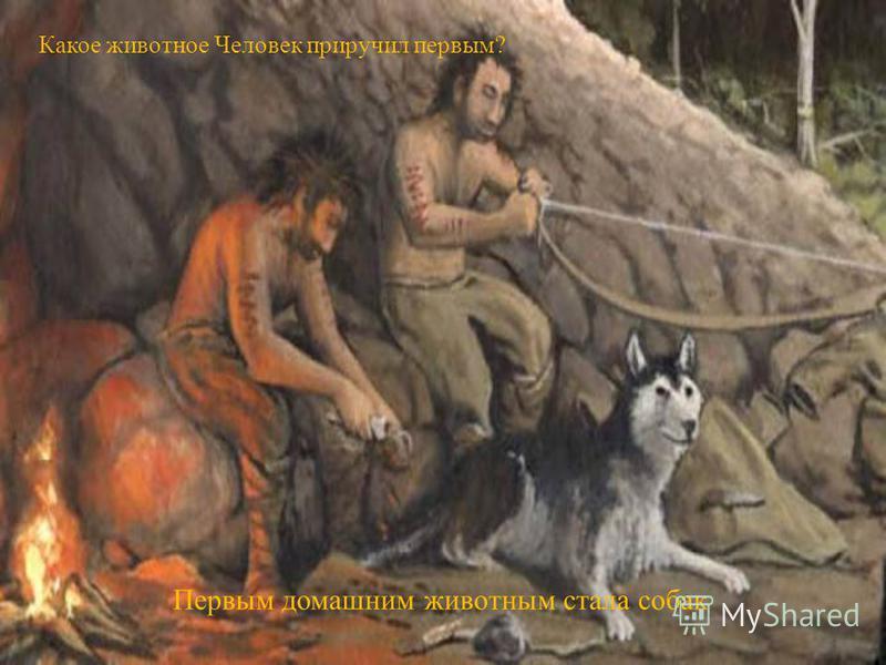 Какое животное Человек приручил первым? Первым домашним животным стала собак