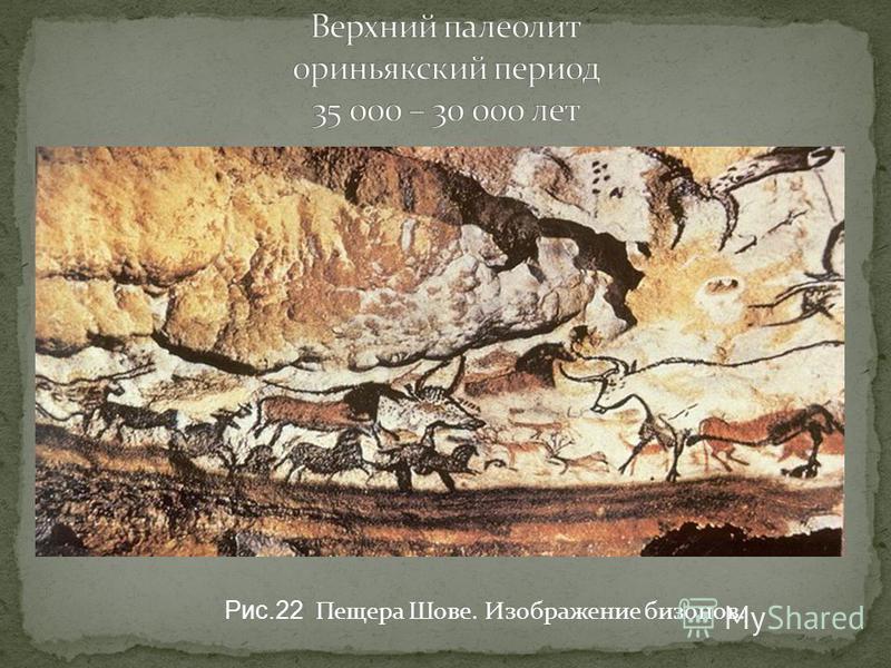 Рис.22 Пещера Шове. Изображение бизонов.