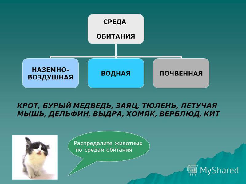 СРЕДА ОБИТАНИЯ НАЗЕМНО- ВОЗДУШНАЯ ВОДНАЯПОЧВЕННАЯ КРОТ, БУРЫЙ МЕДВЕДЬ, ЗАЯЦ, ТЮЛЕНЬ, ЛЕТУЧАЯ МЫШЬ, ДЕЛЬФИН, ВЫДРА, ХОМЯК, ВЕРБЛЮД, КИТ Распределите животных по средам обитания