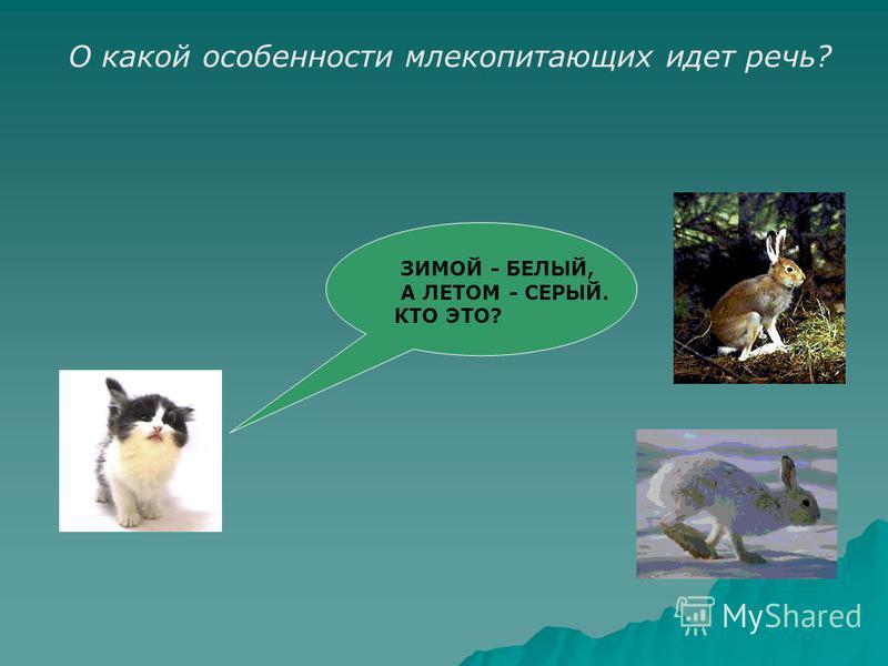 ЗИМОЙ - БЕЛЫЙ, А ЛЕТОМ - СЕРЫЙ. КТО ЭТО? О какой особенности млекопитающих идет речь?