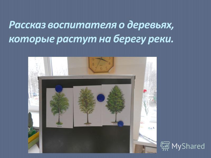 Рассказ воспитателя о деревьях, которые растут на берегу реки.