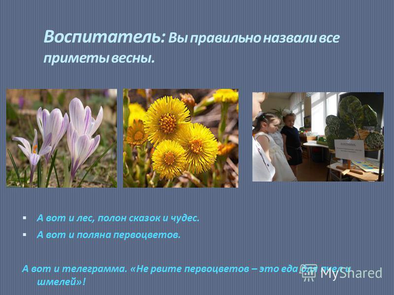 Воспитатель: Вы правильно назвали все приметы весны. А вот и лес, полон сказок и чудес. А вот и поляна первоцветов. А вот и телеграмма. «Не рвите первоцветов – это еда для пчел и шмелей»!