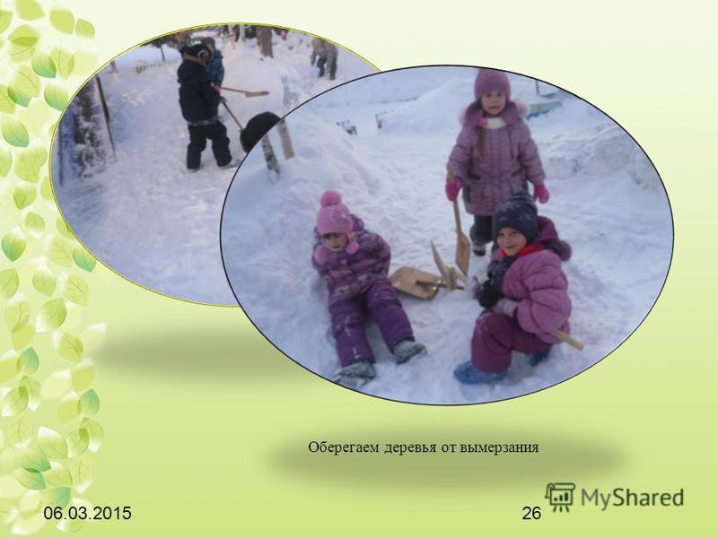 06.03.201526 Оберегаем деревья от вымерзания