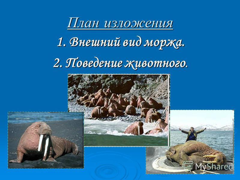 План изложения 1. Внешний вид моржа. 2. Поведение животного.