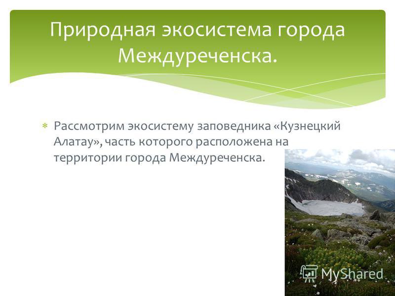 Рассмотрим экосистему заповедника «Кузнецкий Алатау», часть которого расположена на территории города Междуреченска. Природная экосистема города Междуреченска.
